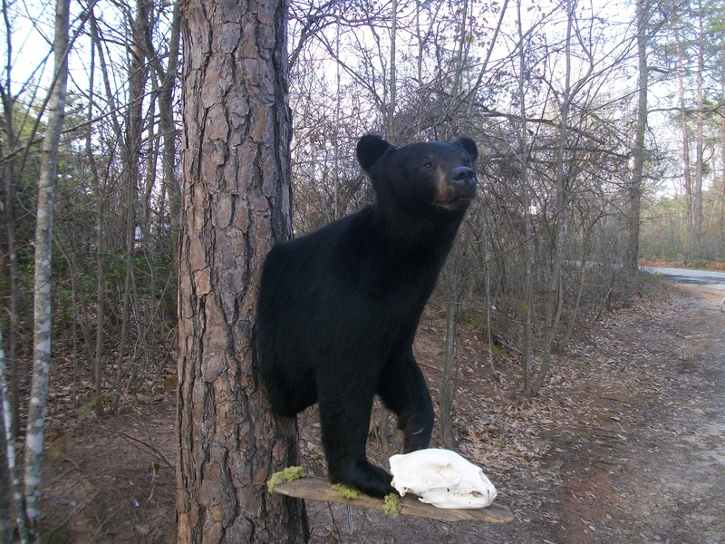 Raines Black Bear 1/2 body
